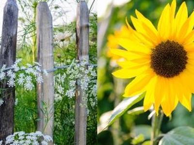 Planten-, Rozen- en Moestuindagen