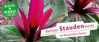 Der Berliner Staudenmarkt